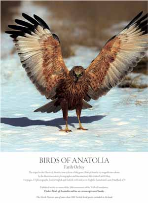 *Tekfen Holding*<br> Birds of Anatolia by Fatih Orbay